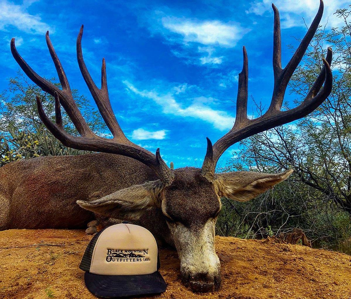 Sheldoni Mule Deer hunting mexico