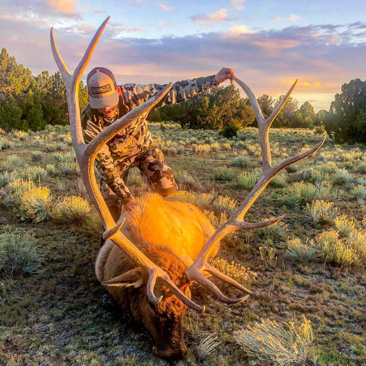 new mexico private land elk hunts