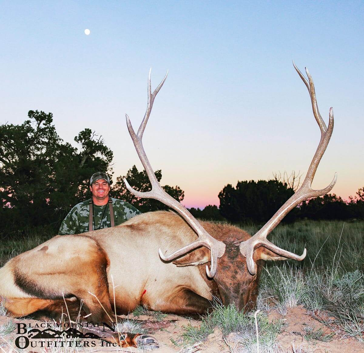 new mexico guided elk hunts