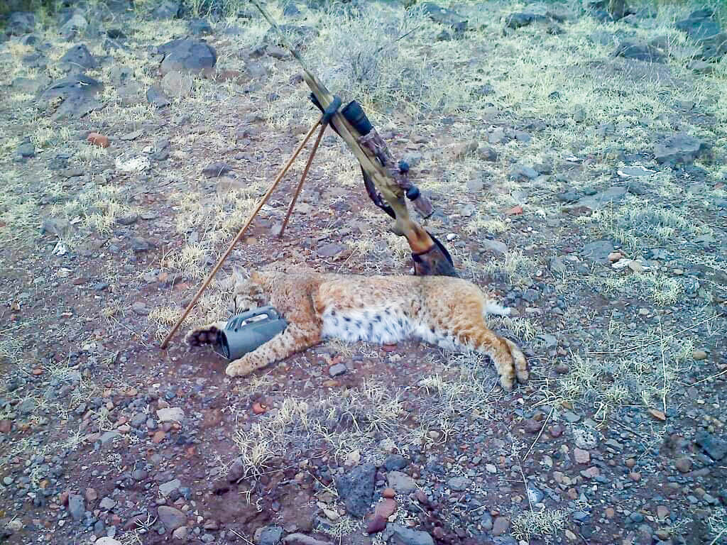 south dakota coyote hunting outfitters