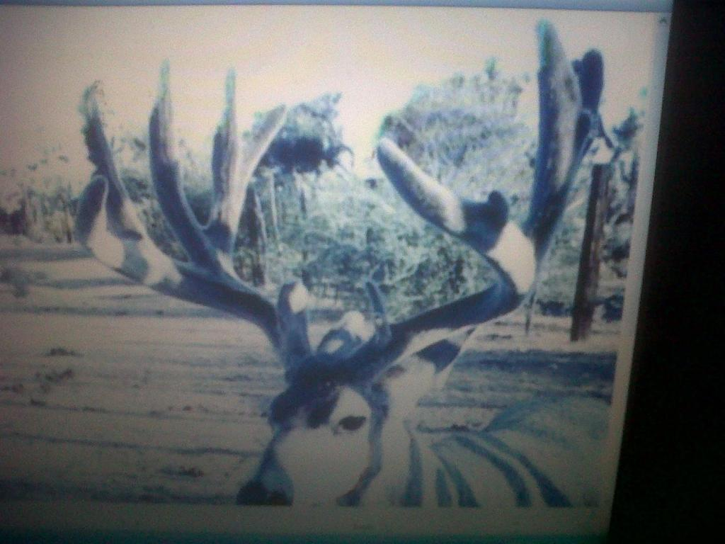 bow hunting in arizona