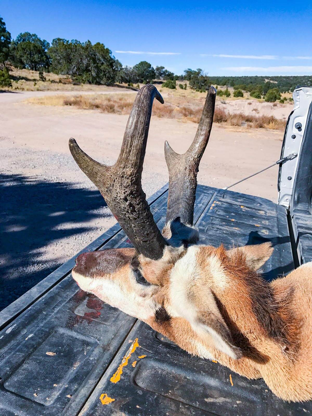 New Mexico rifle pronghorn hunting book now gallery 6