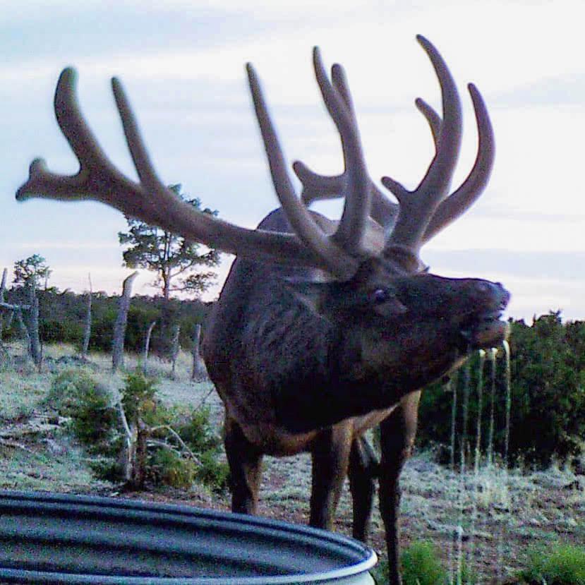 new mexico elk draw