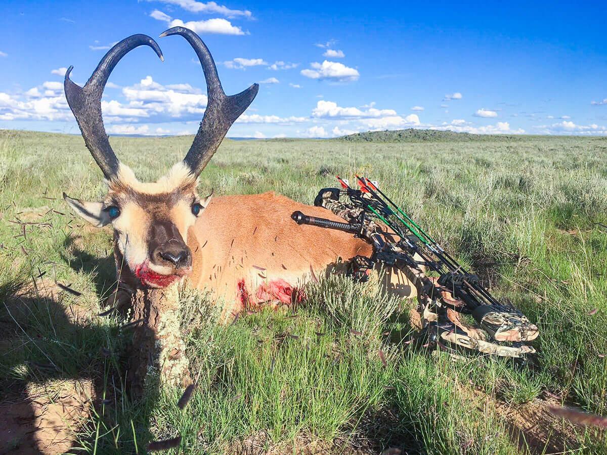 Archery Pronghorn Hunts New Mexico hunts
